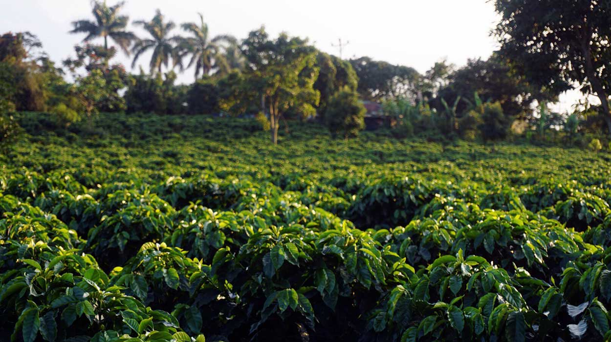 what you should know about Costa Rica coffee plantation