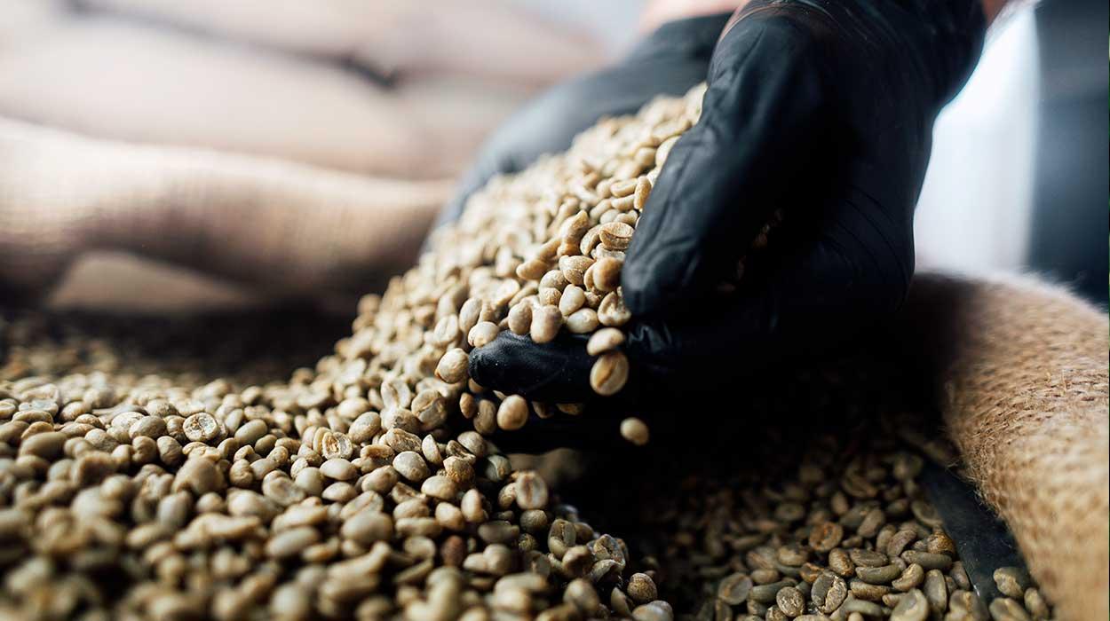 Costa Rica coffee Plantation trip