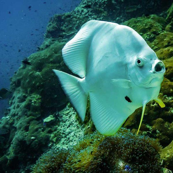 scuba diving costa rica where