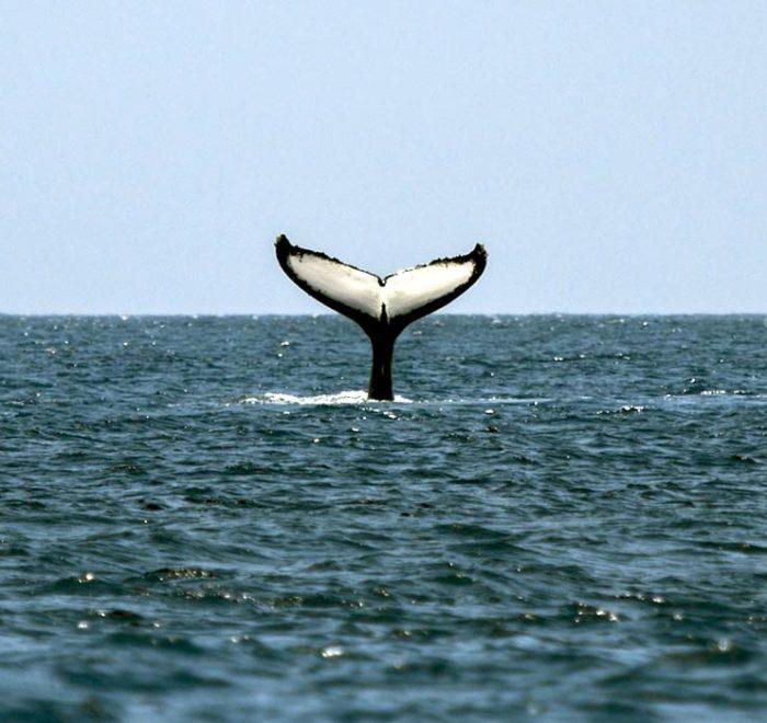 Obserwacja wielorybów - safari fotograficzne kostaryka