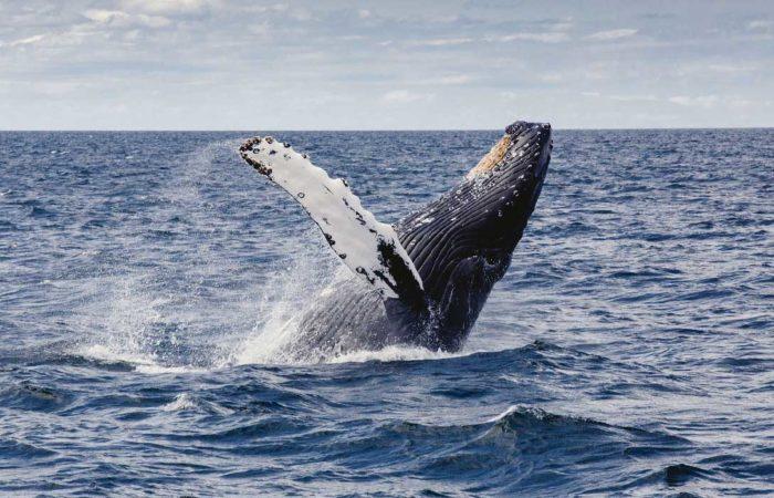 Obserwacja wielorybów w kostaryce gdzie safari fotograficzne