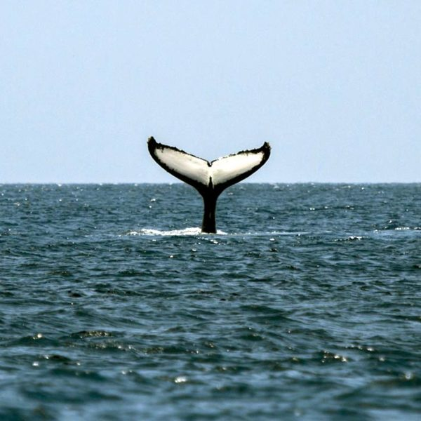 whale watching costa rica price best time