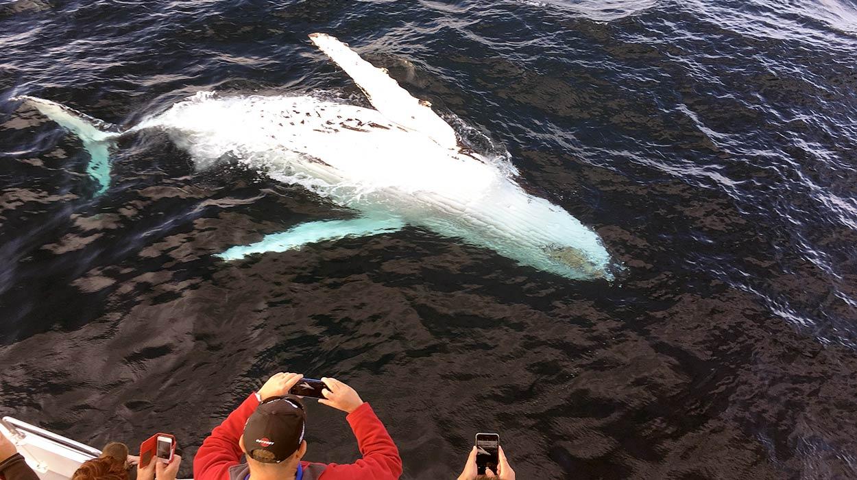 avistamiento de ballenas costa rica cuando donde