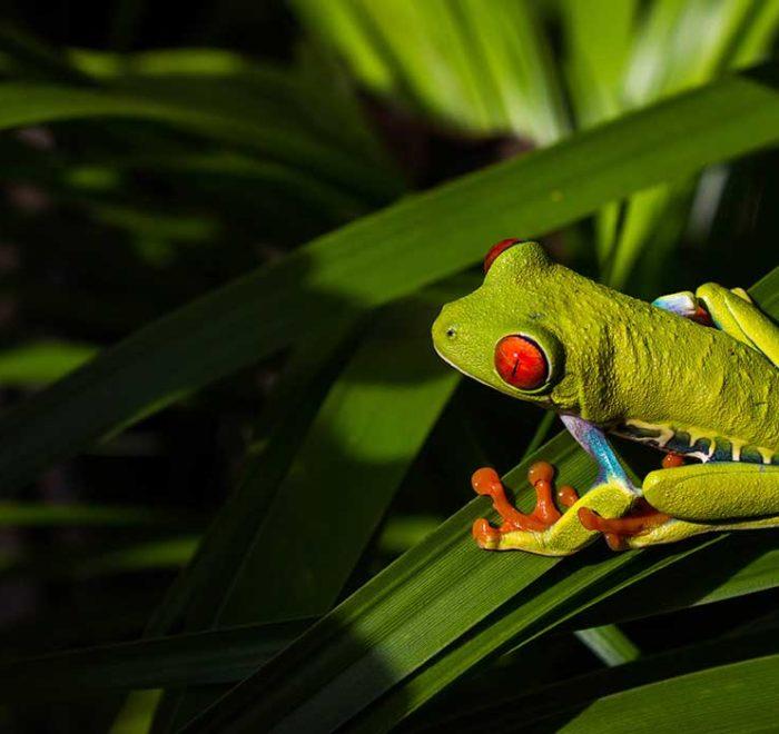Praktyczne informacje o Kostaryce - wskazówki dla podróżujących fauna flora