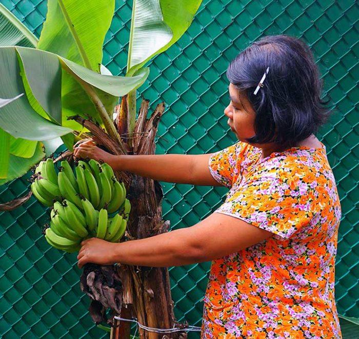 Qué tengo que saber sobre Costa Rica plantacion de banano