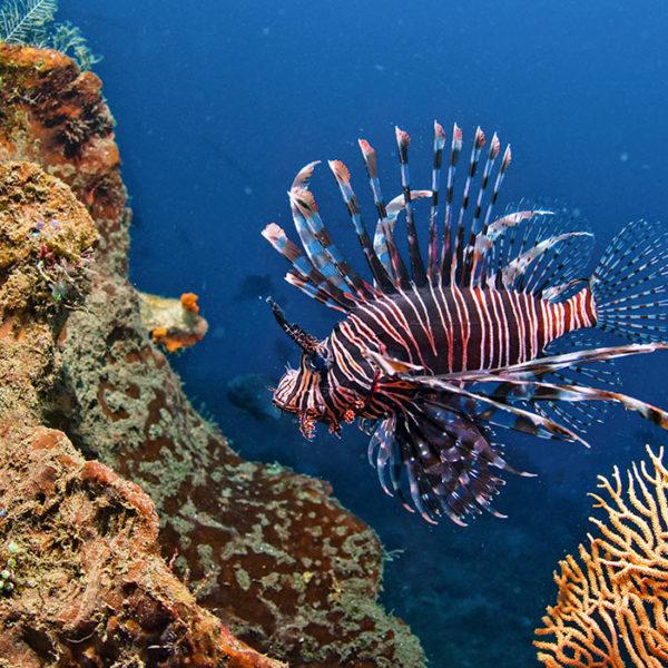 diving safari costa rica padi guide
